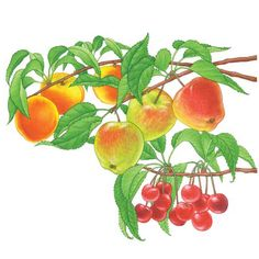 All About Growing Fruit Trees - Organic Gardening - MOTHER EARTH NEWS
