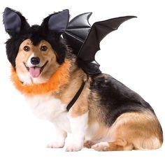 Bat Dog Costume - Medium EntirelyPets