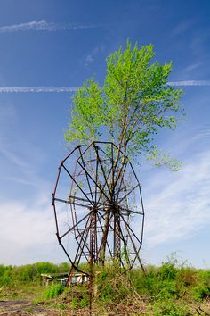 Overgrown ferris wheel at the abandoned amusement park in Chippewa Lake Park in Ohio, closed in 1978. First opened in 1878, the park has been unused for 31 years. Trees now grow through the ferris wheel and coaster tracks. Most of the rides are now gone, though the remnants of a few rides remain. Soon all the rides will be gone as a developer has bought the site.