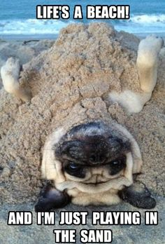 Well it is for u mr.pug but for most people its more than a beach.