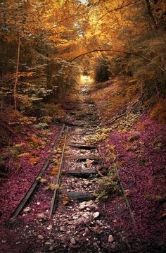 An abandoned railroad in the fall...
