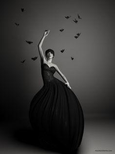 The Black Butterflies...