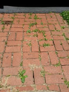 Killing weeds with white vinegar