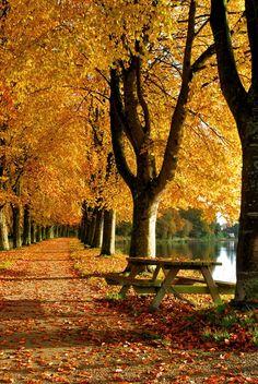 woods - fall