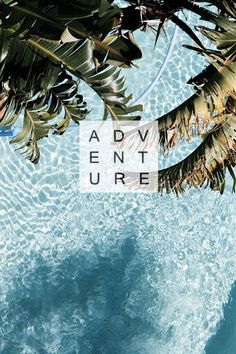 Adventure. palm tree and water