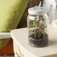 DIY Anyone Can Do: Easy Terrarium | Daily Savings From All You Magazine