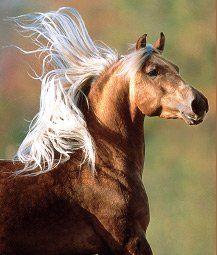horse / breathtaking