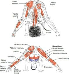 Wide stance yoga pose