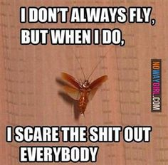 I Dont Always Fly But When I Do - NoWayGirl