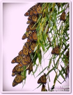 "Our Little Acre: ""Monarch Metamorphosis and Migration Miracles"""
