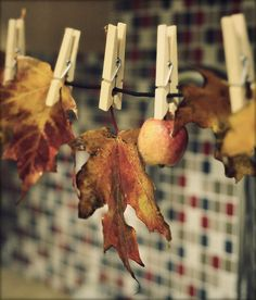 Flood | flickr | Autumn clothesline