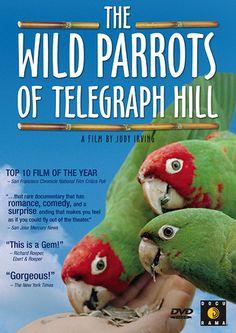 bird, musicians, telegraph hill, parrots, book, movi, films, wild parrot, san francisco