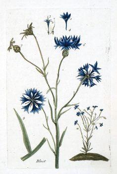 Thrifty Inspirations: Free Vintage Botanical Printables