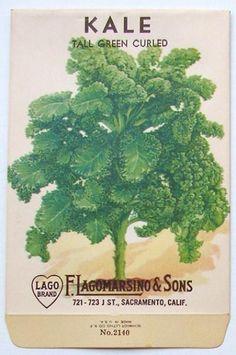 LAGOMARSINO, Kale, Tall Green Curled, Vintage Seed Packet