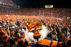 Aubie celebrating on the field after the Iron Bowl victory 2013!
