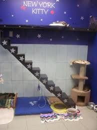 Cat stairs and cat highway! #cats #CatStairs