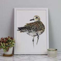 Golden plover art pr