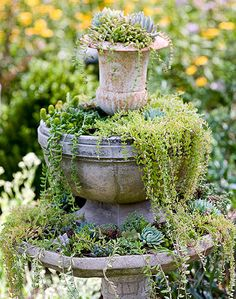 Vignette of Plants Spilling from an Urn, Pot and Birdbath.