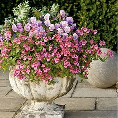 Twinspurs, Violas and Kale | March weather is unpredictable, so for those cool days, try the prolific pink blooms of 'Strawberry Sundae' twinspurs (Diascia hybrid). They will keep looking great even when temperatures fluctuate. | SouthernLiving.com potted plants, garden idea, pot plant, container gardening