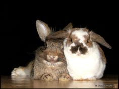 RT @Bunny Buddhism: May we take some time every day to nourish the seeds of joy in ourselves and other bunnies.