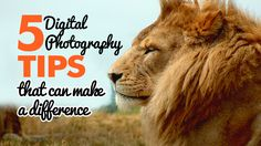 5 Digital Photography Tips That Can Make A Difference