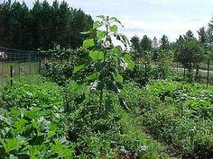 Rid your Garden of Pests Organically garden pests, rid, patio garden, pest organ, gardens