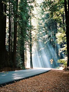 Redwood Forest | California