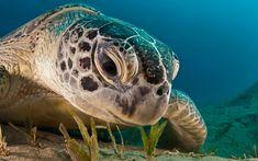 Beautiful Sea Turtle!