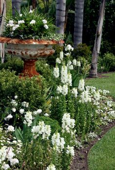 Fountain/Urn  as planter with white violas, stock, and evergreen