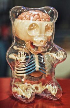 Gummy bear bones and organs by Jason Freeny