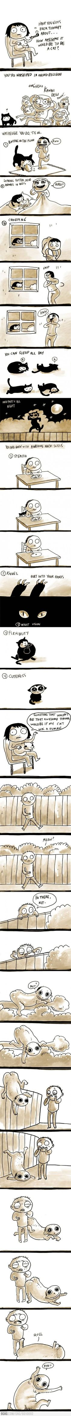 cats, funni stuff, laugh, giggl, hilari, random, humor, awesom, thing