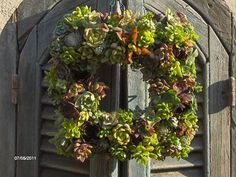 Succulent Wreath -Square Succculent Wreath, Live Succulent Wreath, Wedding Centerpiece on Etsy, $74.00