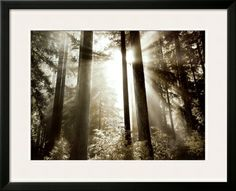 On the Kula Shopping Portal, you can earn 5% on ALL Art.com purchases to be donated to the charity of your choice. Search: Morning Light Print by Dennis Frates at Art.com