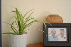 House Plants to Improve Indoor Air Quality