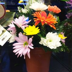 Planted Daisies at our 10th & Reed store. #ACMEMarkets #Daisies