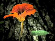 Still life photograph nature photography  by ZenzPhotography,