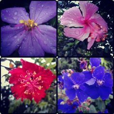 Flores que se dan con el clima de La Sierra en el estado Cojedes #Venezuela