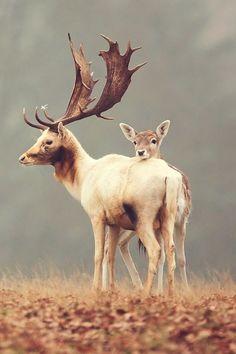buck & doe