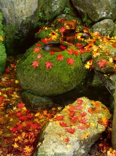 Zen Garden Print autumn, wall murals, art prints, leav, thought, stone, rock, zen gardens, posters