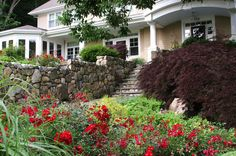 traditional landscape by Amy Martin Landscape Design featuring Flower Carpet Red