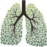 Lung Cleansing Benefits of Oregano