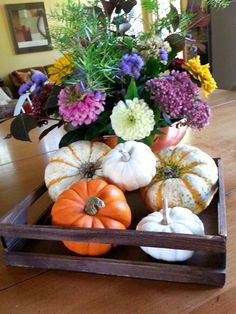 Sweetwater Style: No More Rotten Pumpkins! (DIY with bleach or peroxide)