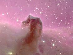 The Horsehead Nebula in Orion  (credit & copyright: Nigel Sharp (NOAO), KPNO, AURA, NSF)
