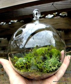 Todays #FlowerFriend is #Moss. It is so interesting the different thing you can do with moss. Follow us on Facebook: Labola Decor Hire and Flowers or visit our website www.labola.co.za