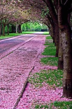 A pink and green spring.