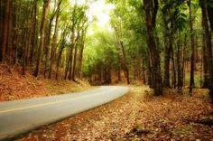 Bohol #Philippines #beautiful #travel #nature