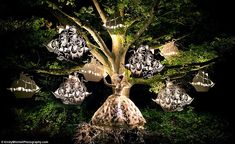 "Awesome photograph by Kirsty Mitchell for her book, ""Wonderland""."