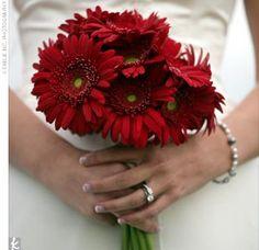 Red gerbera daisies.