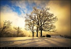 Dave Allen - 8:18 PM - Public  Rime Ice covered oak trees in winter fog at Jump Off Rock near Hendersonville NC.