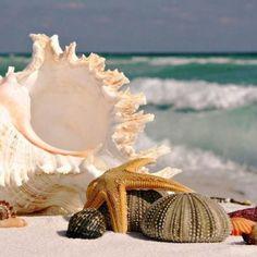 Conchas y estrellas de mar. www.fustaiferro.com